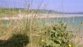 Camera rises to reveal Porthkidney Beach  St Ives 44489300