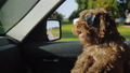 Funny brown dog in sunglasses rides on the hands of the owner. Ride with a pet in the car 44575530