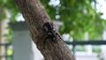 甲壳虫 黑色 虫子 44578486