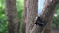 甲壳虫 黑色 虫子 44578488