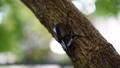 甲壳虫 黑色 虫子 44578490