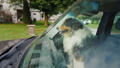 The dog travels in the car, sits next to the driver. The windshield reflects trees 44584364