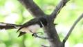 นก,สัตว์,สัตว์ต่างๆ 44587247