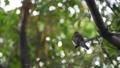 鸟儿 鸟 动物 44587248