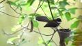 นก,สัตว์,สัตว์ต่างๆ 44587290