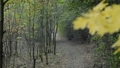 Lonely path in the autumn forest. Zoom in. 44601052