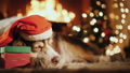 Shepherd in a festive cap sweetly dozing by the burning fireplace. Near it lies a crust with a gift 44628526