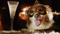 A dog in a carnival mask lies by the fireplace, a glass stands next to it. Holiday theme with pets 44628939