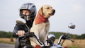 motorcycle, dog, man 44702248