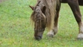 Horse grazing on the meadow. No camera motion. Det 44703327
