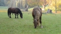 Horses grazing on the meadow.  No camera motion. 44703328