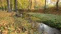 River bed in the autumn. No camera motion. 44703429