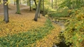 River bed in the autumn. No camera movement. 44703431