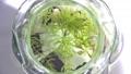 Medaka swimming in the tank 44722430
