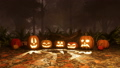 Various Jack-o-lantern pumpkins in night forest 44729573
