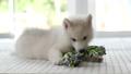 ลูกหมา,สัตว์,สัตว์ต่างๆ 44738916