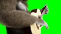 กอริลลา,สัตว์,สัตว์ต่างๆ 44778727