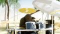 Beach Palm Tree 44778971