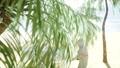 Beach Palm Tree 44778989