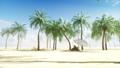 海滩 手掌 树木 44779410