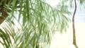 Beach Palm Tree 44779412