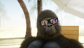 Funny gorilla in glasses lies on a deckchair. Beach and palms. Spa, resort concept. Realistic FullHD 44779425