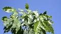 잎, 이파리, 잎사귀 44802436
