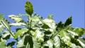 잎, 이파리, 잎사귀 44802438