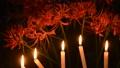 曼珠沙華の花とロウソクの炎 44802444