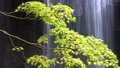 Tatsusawa Fudo瀑布·秋季4k射击(福岛县,猪苗代町) 44882933