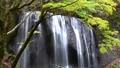 Tatsusawa Fudo瀑布·秋季4k射击(福岛县,猪苗代町) 44882934