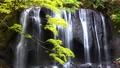 Tatsusawa Fudo瀑布·秋季4k射击(福岛县,猪苗代町) 44882936