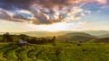 เกษตรกรรม,ตอนเย็น,พื้นหญ้า 44965922