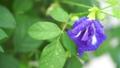 ดอกไม้,หยดน้ำ,หล่น 44977982