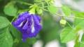 ดอกไม้,หยดน้ำ,หล่น 44977984
