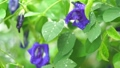 ดอกไม้,หยดน้ำ,หล่น 44977987