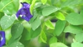 ดอกไม้,หยดน้ำ,หล่น 44977988