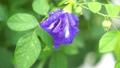 ดอกไม้,หยดน้ำ,หล่น 44977989