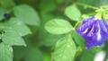 ดอกไม้,หยดน้ำ,หล่น 44977992