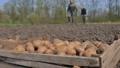 potatoes, plant, harvest 45009940