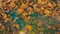 Gardener raking fallen autumnal leaves FHD FullHD Clog footage 45045325