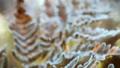 frozen autumn fern leaves in ice crystals. Autumn nature 45068157