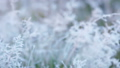 grass is frozen in ice crystals on the backdrop 45068158