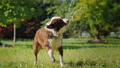 Funny dog playing with a garden hose. Play with the owner and have fun together 45090271