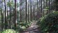 熊野古道を歩く 45094121