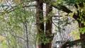 使用在一棵樹附近的兩隻灰鼠在秋天的森林裡 45132944