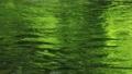 8月 緑一色の川面 45139824