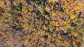 支笏湖周辺の紅葉(空撮 真俯瞰) 45190401