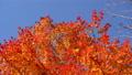 鮮やかな紅葉(ティルトアップ) 45192693