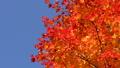 鮮やかな紅葉(ティルトアップ) 45192698